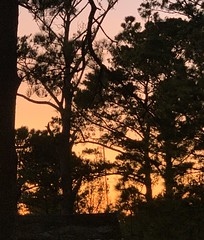 Stumpy Point Sunset (phthaloblu) Tags: sunset stumpypoint nc northarolina usa obx trees