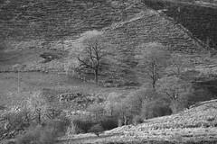 Hillside (Tony Tooth) Tags: nikon d600 nikkor 200mm f4 ai hillside countryside theroaches upperhulme staffs staffordshire staffordshiremoorlands bw blackandwhite monochrome