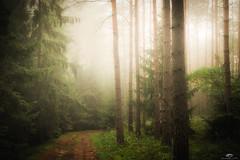 Krzysztof Tollas (krzysztof.tollas) Tags: forest mgła natura światło drzewa świt krajobraz mist leśna ścieżka nikon atmosfera