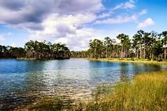 Long Pine Key, Florida Everglades on Kodak E100 slide film (wetmorew) Tags: analog longpinekey slidefilm kodake100 landscape colorfilm florida everglades