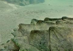 water dragon (SM Tham) Tags: asia southeastasia malaysia perak ipoh tambun thelostworldoftambun pettingzoo reptile turtle shell back closeup patterns animal aquarium water