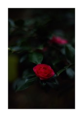 This work is 3/21 works taken on 2019/12/1 (shin ikegami) Tags: sony ilce7m2 a7ii sonycamera 50mm lomography lomoartlens newjupiter3 tokyo 単焦点 iso800 ndfilter light shadow 自然 nature naturephotography 玉ボケ bokeh depthoffield art artphotography japan earth asia portrait portraitphotography