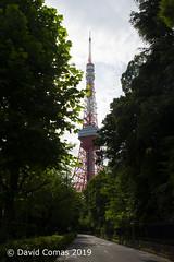 Tokyo - Roppongi - Tokyo Tower (CATDvd) Tags: nikond7500 estadodeljapón estatdeljapó japan japó japón nihon nihonkoku niponkoku nippon stateofjapan 日本 日本国 catdvd davidcomas httpwwwdavidcomasnet httpwwwflickrcomphotoscatdvd july2019 architecture arquitectura building edifici edificio kantōregion kantōchihō regiódekantō regióndekantō 関東地方 tokio tōkyō tokyometropolis tōkyōto tòquio 東京 東京都 minato minatoku 港区 torredetòquio tokyotower 東京タワー