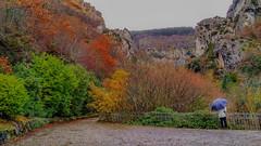 171217 NACEDERO DE ARTETA (MAVARAS) Tags: mavaras otoño autumn navarra colores arteta