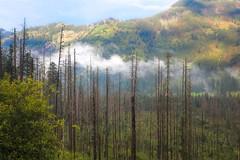 Mountain Fog (Siuloon) Tags: tatry tatra poland pologne polska polonia polen forest fog tree view landscape landschaft landscapes zakopane morskieoko droga szlak