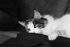 Donna (unbunt.me) Tags: film meinfilmlab analog wwwmeinfilmlabde ilford cat delta400 katze 35mm blackwhite bw blackandwhite