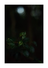 This work is 1/21 works taken on 2019/12/1 (shin ikegami) Tags: sony ilce7m2 a7ii sonycamera 50mm lomography lomoartlens newjupiter3 tokyo 単焦点 iso800 ndfilter light shadow 自然 nature naturephotography 玉ボケ bokeh depthoffield art artphotography japan earth asia portrait portraitphotography