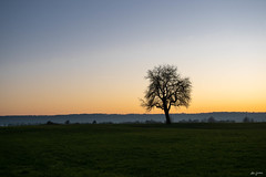 lonely and leafless tree in the winter time (kleiner_eisbaer_75) Tags: baum tree nature natur winter kalt kälte sonnenuntergang sunset ngc