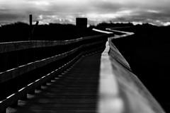 Boardwalk (Ray's.Photography) Tags: blackwhite boardwalk pathahead newyear ngysa