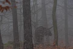 Skulptur im Nebelwald / Sculpture in cloud forest (reipa59) Tags: nebel landschaft pfalz donnersberg diesig nordpfalz sculpture skulptur morning light nature germany landscape early warm natur northern morgen morgens rheinlandpfalz morgenstunde rhinelandpalatinate palatinate frühmorgens adlerbogen fog grau