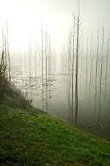 Frio amanecer (pascual 53) Tags: nieblas amanecer inundacion chopos canon 5ds 35mm largaexposicion calma luz color vertical larioja alfaro