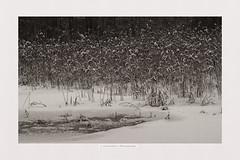 Snowing (Listenwave Photography) Tags: winter snow sepia landscape russia sigma iced foveon rus listenwave ngc фовеоныч fv10 русский стиль японский forest monotone snowing tone снежный оттенки точность тональность зимний старт 200fav