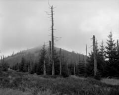 Clouds lifting from Lusen summit (str.ainer) Tags: mamiya rb67 sekorc90mm ilford fp4 adox fx39 nationalpark bayerischerwald bavarianforest lusen hugin gimp