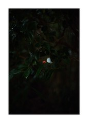 This work is 6/21 works taken on 2019/12/1 (shin ikegami) Tags: sony ilce7m2 a7ii sonycamera 50mm lomography lomoartlens newjupiter3 tokyo 単焦点 iso800 ndfilter light shadow 自然 nature naturephotography 玉ボケ bokeh depthoffield art artphotography japan earth asia portrait portraitphotography