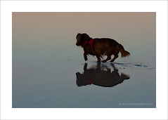 Dog Days (prendergasttony) Tags: d7200 dog days reflection beach border nikon tonyprendergast elements sunrise walk sea water coast colourful colour legs