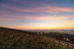 Just before the sunrise (ZeGaby) Tags: champagne hdr irix15mm landscape leverdesoleil mareuilsuray marne naturephotography paysage paysagedechampagne pentaxk1 sunrise vignes vignoble vines vineyards