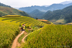 Mu Cang Chai (joeri-c) Tags: mucangchai rice ricefield ricefields mountain mountains harvest farming agriculture traditional travel tourism vietnam northvietnam nikon d800 nikond800 asia 35mm nikon35mm nikkor35mm field hills elevation riceharvest farm yênbái yenbai