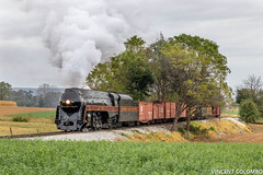 N&W 611 and a Tree Tunnel (Vincent Colombo) Tags: steamlocomotive