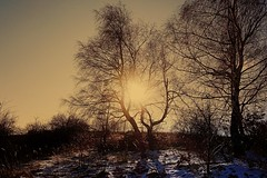 winter sunset (majka44) Tags: light sunset tree nature color snow evening landscape sun sky shadow slovakia dry birch grass field