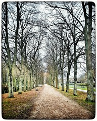 Le canal de Reims. La coulée verte. Reims. 2020.  #Reims #lacouléeverte #couléeverte #bikeride #vélo #canal #channel #mobilphoto #note9 #snapseed #urban #urbanphotography #urbanphotographer #endomondo #endorphin #reimsmaville #nature #outside #clouds #sky (Phimagery) Tags: snapseed note9 channel yellow clouds trees endorphin colors vélo mobilphoto canal sky ciel green urbanphotographer bikeride nature cielo tree endomondo water urbanphotography reims colour urban blue outside couléeverte lacouléeverte reimsmaville colours