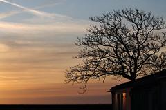 L'arbre d'habitude cache la forêt...ici, c'est plutôt la mer... (NUMERIK33) Tags: arbre tree ocean matin sunset soleil clouds nuages mer maison house lumière light aixplore ile aix explore topfivenumerik33