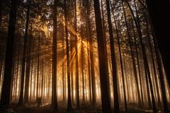 Enjoying a few Sun Rays (lukas.b0) Tags: europa spaziergang aargau nebel winter horben sonne nebelmehr orte land reisen 2020 wald schweiz landschaft fog forest landscape sun switzerland travelling wood kleinwangen kantonluzern