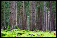 mit Moos bedeckter Boden (tingel79) Tags: outdoor tingelpixx forest wald moos mecklenburgvorpommern müritznationalpark landschaft landscape sony epz18105mmf4goss photography naturfotografie photograph view baum tree nature natur