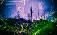 Remember Mercy (Crusty Da Klown) Tags: canada britishcolumbia bc film canon nature wilderness forest landscape remember mercy scripture purple green brilliant art artistic texture outside outdoors sparse scarce rocky balboa eyeofthetiger