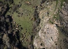 i want to fly (*BegoñaCL) Tags: cow mountain shadow path hike larioja begoñacl bg~