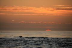 A peaceful, healthy and happy new year (Christopher DunstanBurgh) Tags: noordwijk nordsee northsea noordzee holland