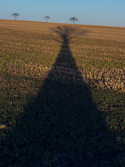 Black fontain (verblickt) Tags: austria weinviertel trees shadow agriculture cropland humor