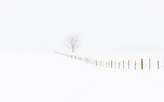 Winter Landscape (rigpa8) Tags: minimalism nature white snow winter whiteout january colorado cold winterlandscapes rockymtnwest tree serenity fence wilderness flatlight fenceline snowing landscape frozen zen