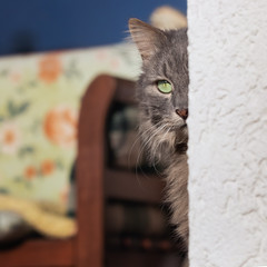 Just around the corner (FocusPocus Photography) Tags: fynn fynnegan katze kater cat ecke corner versteckt hidden