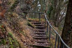 Heute im Wald (trixi.mi) Tags: treppen wald wälder stufen bäume trees eosrp 200mm28 winteransichten januar woods