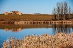 Gallocanta (Aragon/Espagne) (PierreG_09) Tags: aragon espagne spain espanya españa lac laguna gallocanta bird lake vogel uccello pájaro avemigratoria cubel lagunadeguialguerrero guialguerrero