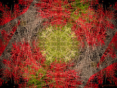 Winterberry Kaleidoscope (Donald.Gallagher) Tags: abstract kaleidoscope lenstagger longwood longwoodgardens northamerica pa pennsylvania public topazaiclear typecolor typephotoshop typeshutterbuttonfocus typewideangle usa vibrance winter kennettsquare