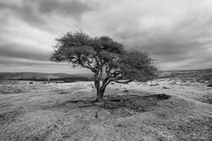 Holne - Dartmoor UK (pm69photography.uk) Tags: lenstagger devon dartmoor dartmoornationalpark venford venfordreservoir trees tree bw blackandwhite southwest sony sonya7r3 sonya7riii ilovedevon ilce7rm3 ilovedartmoor monochrome venusoptics laowa15mm laowa wideangle atmospheric atmosphere moody moors pm69photography