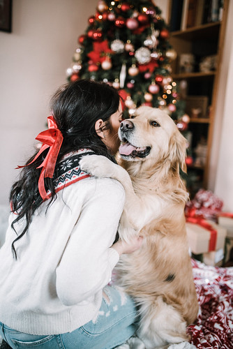 Beautiful girl in white sweater with a golden retriever dog. Christmas tree background.