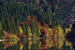 Colori (giannipiras555) Tags: colori lago tovel trentino dolomiti montagna autunno landscape paesaggio panorama alberi natura riflessi water green collina
