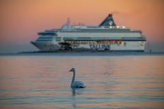 Dreaming of a free ride (Tommi Vainionpää) Tags: swan ferry sea sunset archipelago lauttasaari helsinki finland pastel