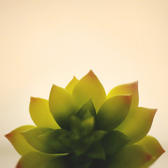Day 5 : The Art of Being (Randomographer) Tags: project365 366 plant nature succulent green leaf leaves soft organic alive life grow orange minimal light 5 2020 viii