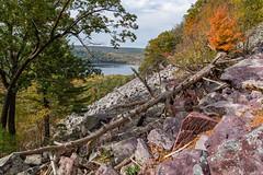 Fallen Soldier (Greg Riekens) Tags: trees usa fallcolors winsconsindells devilslake nikond500 wisconsin devilslakestatepark autumn landscape midwest fall statepark rocks