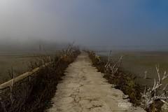 Antigua carretera N 401 a su paso po Del Río Guadiana , Ciudad Real (Gustavo_J_Rubio) Tags: cauce rioguadiana guadiana niebla snapseed ciudadreal olympus 2020 invierno frio gustavo carretera