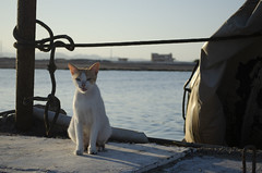 Gime Fish (Abdullah Taher) Tags: winter white egypt egyptian sea travel trip yellow sky day sun image photo photograph portrait africa shot nikon life landscape look port cat bright blue beach boat ngc animal