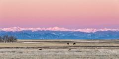 January 5, 2020 - Pastel colors at sunrise. (Tony's Takes)