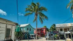 Paradise island (ssokolowski) Tags: belize cayecaulker caribbean caribbeansea caribbeanvibes coast palmtrees paradise island paradiseisland houses woodenhouses