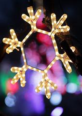 Bot-Illum_RD_18 (ryry602) Tags: botanica illuminations lights xmas displays christmas spirit holiday december trees snowflakes dark night cold winter bokeh canon m6