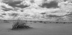 (Celeste Saez) Tags: blackandwhite blancoynegro black white sky skyline cielo nubes nublado clouds cloudy moody monocromatic landscape paisaje playa beach claromeco samsung