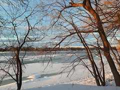 Half frozen river (angelinas) Tags: rivers riverscape trees landscapes ice water snow waterdscapes paesaggio paysages quebec rivieredesprairies natureza natura nature outdoor winter