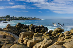 Lover's Point (Ping & Wenji) Tags: pacificgrove california
